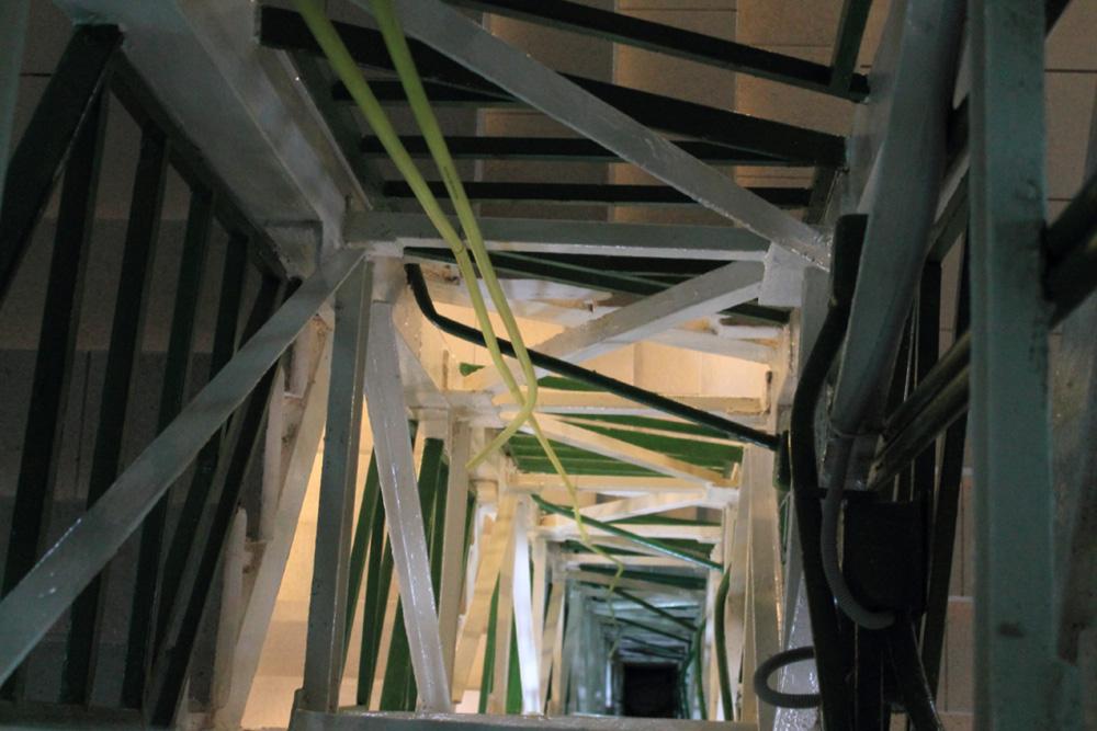 Лестница в Экологическом музее